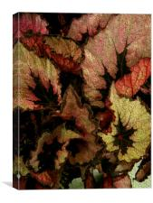 ROSIE HEUCHERA 1, Canvas Print