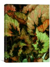 HEUCHERA LEAVES 2, Canvas Print