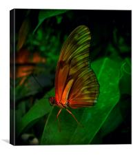 JULIA FLAMBEAU BUTTERFLY, Canvas Print