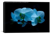 COOL BLUE ORCHID, Canvas Print