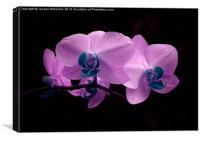 PRETTY PINK ORCHID, Canvas Print