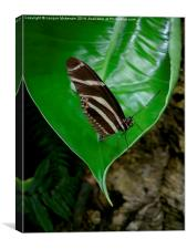 BUTTERFLY & LEAF, Canvas Print