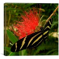 ZEBRA LONGWING BUTTERFLY, Canvas Print