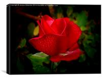 ROSEY RED, Canvas Print
