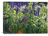 Cute sparrow, Canvas Print