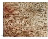 Fallen Tree, Canvas Print