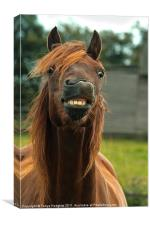 Horses can smile too