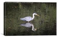 Crane, Canvas Print