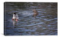 Ducking Ducks, Canvas Print