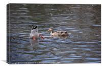 Ducking Duck, Canvas Print