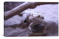 Nigel - Fearless Bearded Dragon