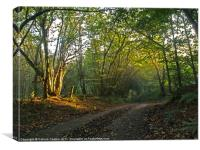 Morning Sun Lane, Canvas Print