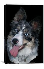 Blue Merle, Canvas Print