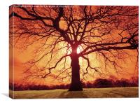 Oak Silhouette, Canvas Print