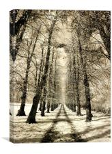 Infrared Avenue, Canvas Print