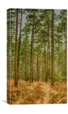Haldon Forest, Canvas Print