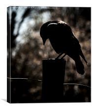 Gothic Bird, Canvas Print