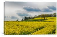 Fields of Devon, Canvas Print