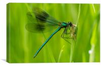 Mayfly Lunch, Canvas Print