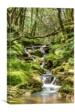 Datmoors hidden treasures, Canvas Print