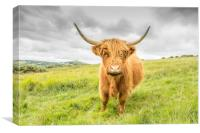 Dartmoor's Highland Cow, Canvas Print