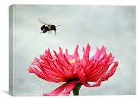 Gerbera and the Bee