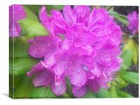 Purple Rain, Canvas Print