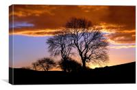 Radnor Forest Trees Silhouette, Canvas Print