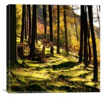 Elan Valley Trees, Canvas Print