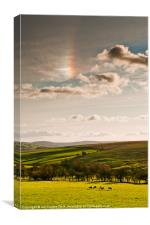 Sundog Sheep, Canvas Print
