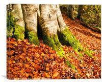 Autumns Colours, Canvas Print