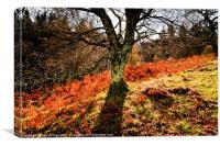 A splash of Autumn, Canvas Print