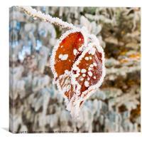 Frozen Heart, Canvas Print