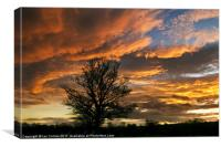Wild Sunset, Canvas Print
