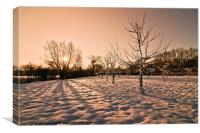 Snowy Orchard, Canvas Print