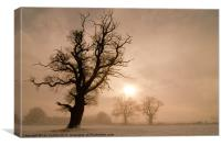 Trees in Mist, Canvas Print