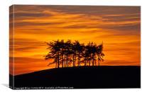 Radnor Tree Silhouette, Canvas Print
