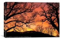 Tree Silhouettes, Canvas Print