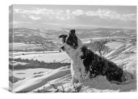 Snow Collie Monochrome, Canvas Print