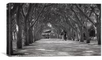 Couple walking under trees, Canvas Print