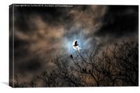 Solar Eclipse Bird, Canvas Print