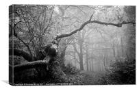 Black and White Misty Wood, Canvas Print