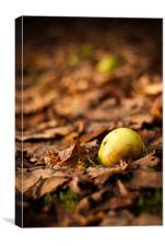 Autumnal Scene Fallen Apple, Canvas Print