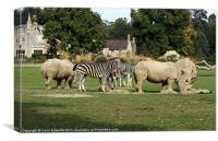 Zebras and Rhinos, Canvas Print