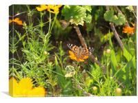 Butterfly in Greek garden, Canvas Print