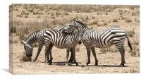 zebra friends, Canvas Print