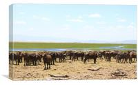buffalo army, Canvas Print