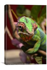 Chameleon chilling on a branch, Canvas Print