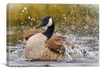 Canada Goose, Canvas Print