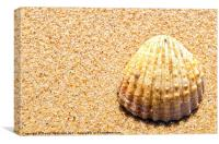 Seashell, Canvas Print